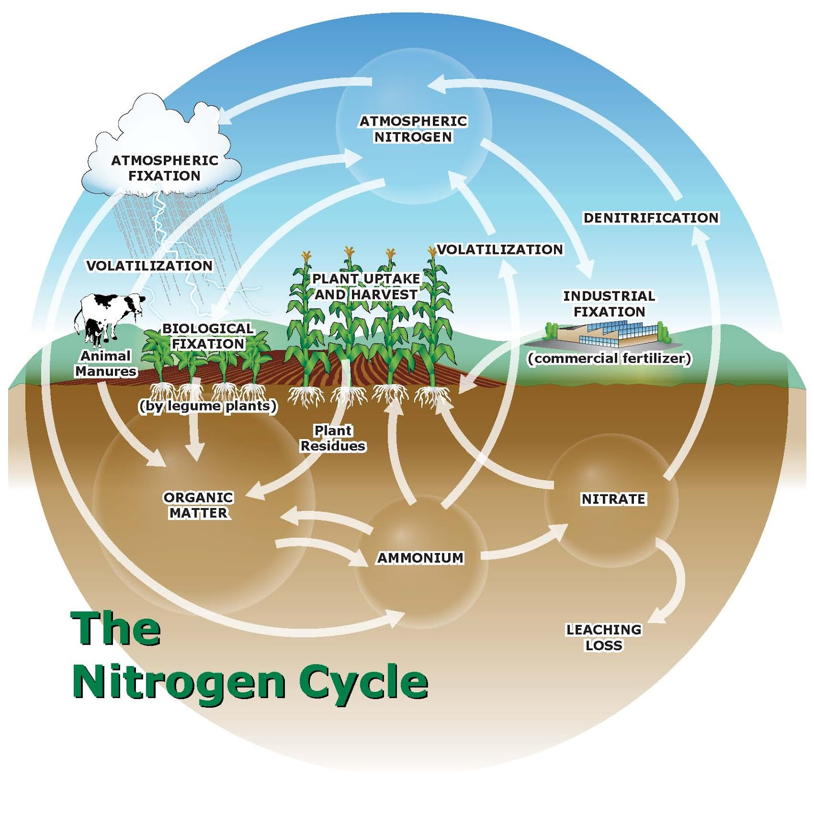 nitrogen cycle nasa - photo #9