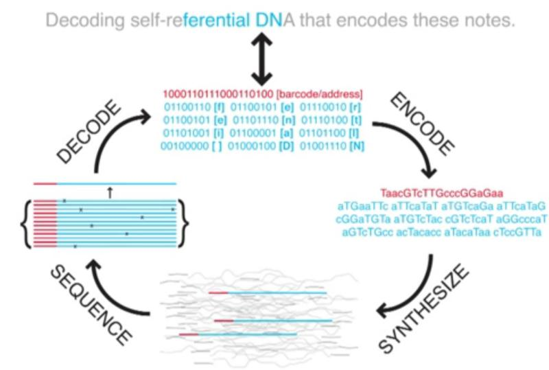 Storing data in DNA
