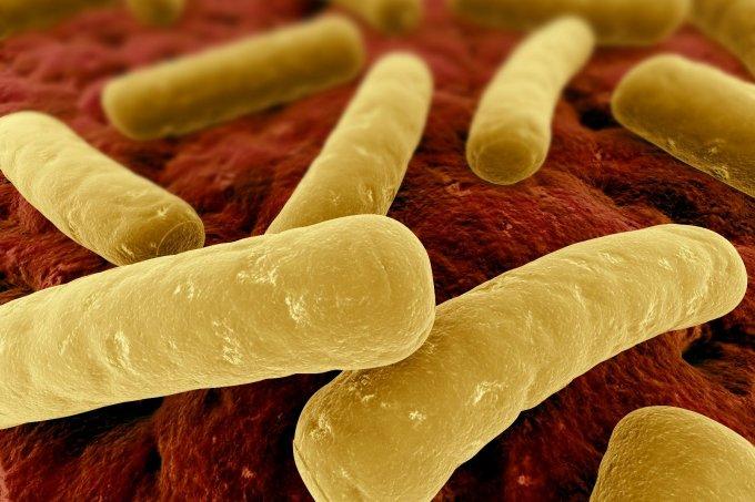 Will Bacteria-Eating Viruses Exterminate Superbugs?