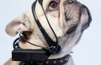 What does your dog want you to know? Put this headset on him to find out. Photo © NCID