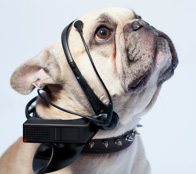 Hear What Your Dog is Thinking with This Mind-Reading Headset