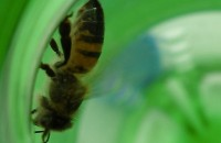 Think you're saving the planet? These bees have gone green. Image courtesy http://sensetainable.com