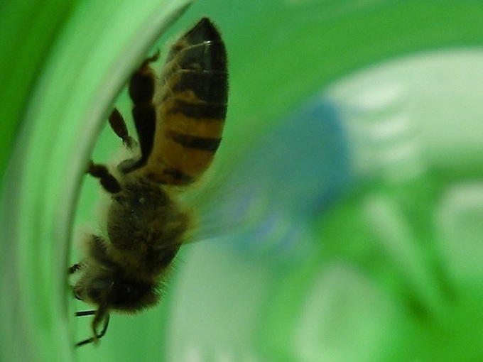 Are Bees the Answer to Our Plastic Waste Problems?
