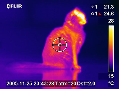 Thermal Imaging Gadget Turns Your Iphone Into A Heat