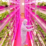 Old Factory Turned into the World's Largest Indoor Farm