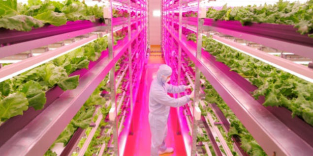 Japanese Farmer Builds High-Tech Indoor Veggie Factory (Image  courtesy http://www.gereports.com/)