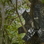 Old Smartphones Get New Life as Rainforest Guardians