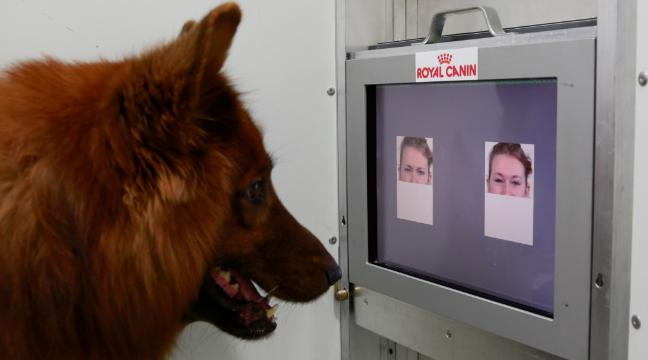 Researchers: Your Dog Can Detect Human Emotion Just by Looking at Your Face