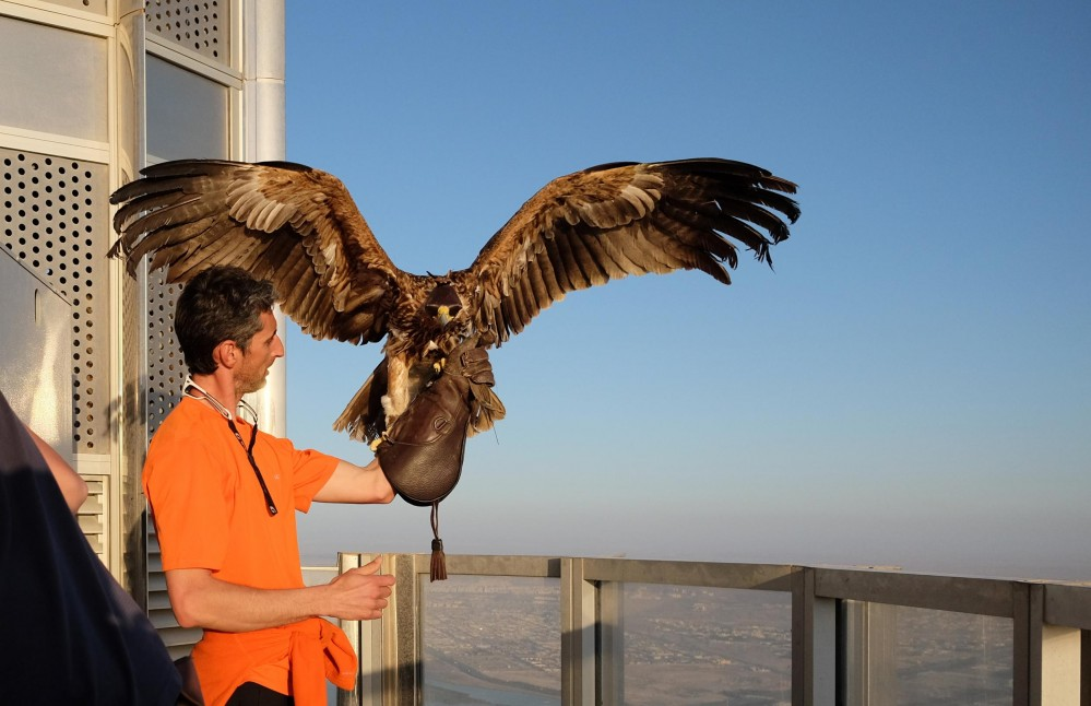 Eagle Burj Khalifa (Image Courtesy https://www.facebook.com/freedomconservation)