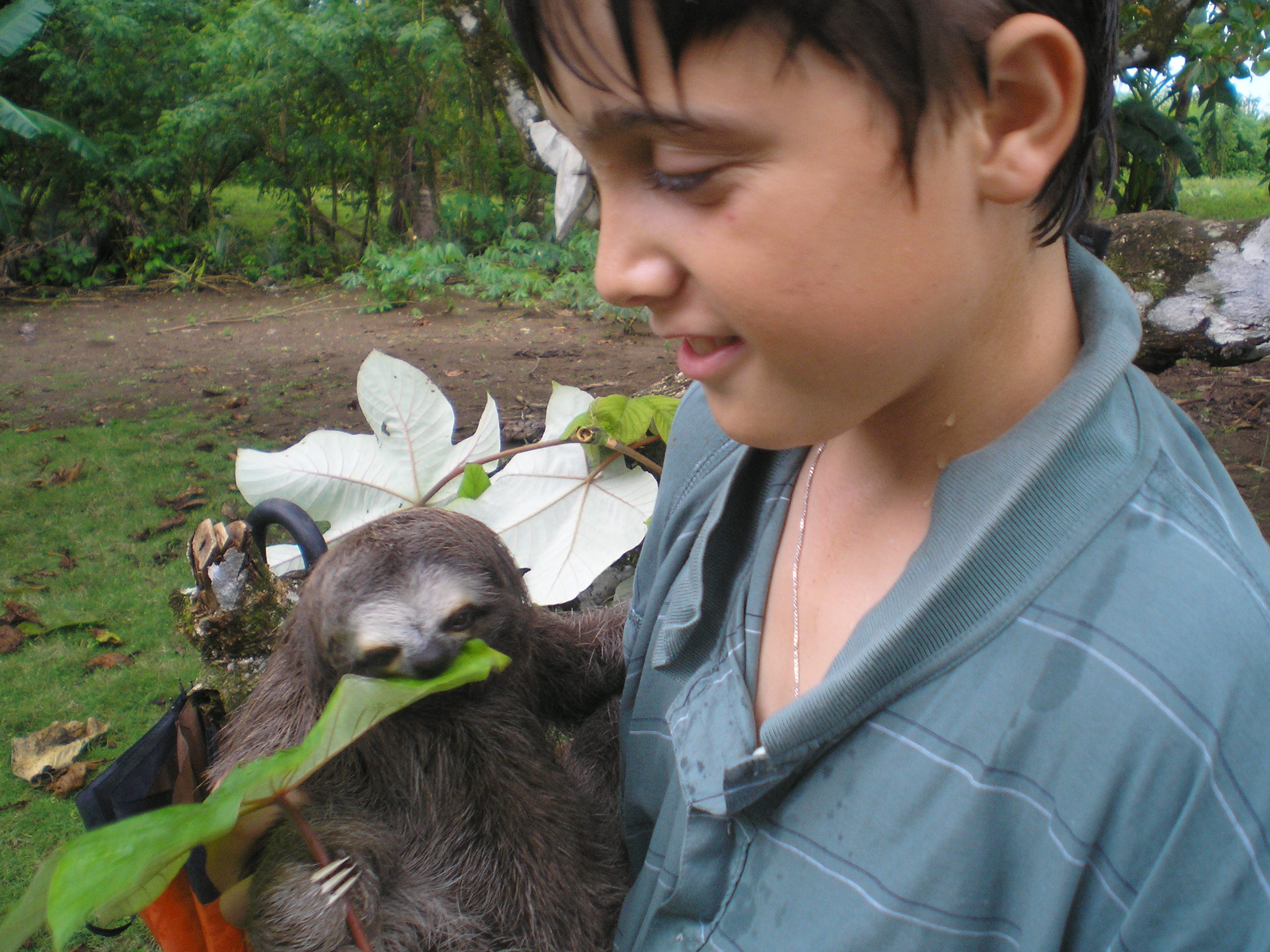 What's a Sloth Got That We Have Not? Fur Full of Beneficial Bacteria That Could Save Our Lives