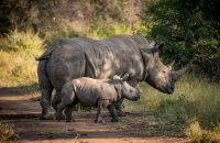 Protecting Rhinos with Technology