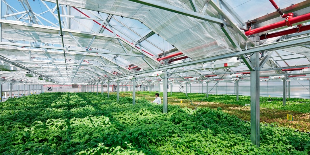 Chicago Tops the Field With the World's Largest Rooftop Greenhouse