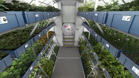 ISS Garden