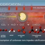 Ocean Acidification: Earth's Ocean Waters on Acid Generally Result in a Bad Trip!