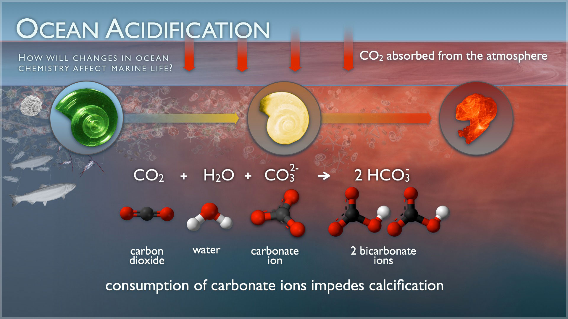 Ocean Acidification: Earth's Ocean Waters on Acid Generally Result in a Bad Trip!