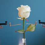 Scientists Create an Incredible Cyborg Rose with Electrical Veins and Circuits