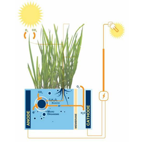 Image courtesy www.Plant-e.com