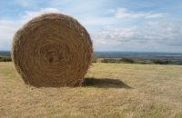 Data Deluge Needle in the Haystack