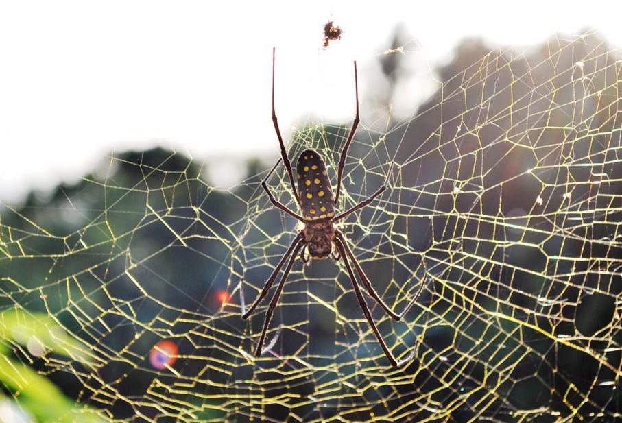 Understanding the Mechanics of Spider Silk to Construct Futuristic Design Materials