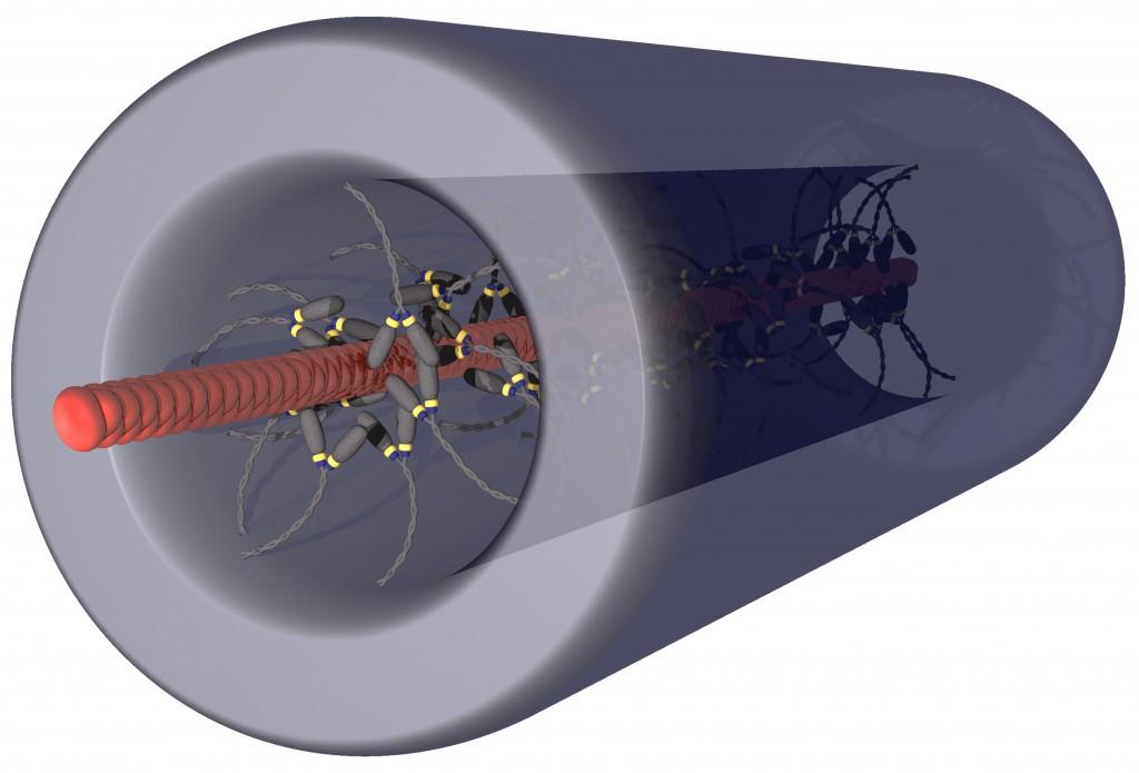 Biological Computers & Molecular Motors