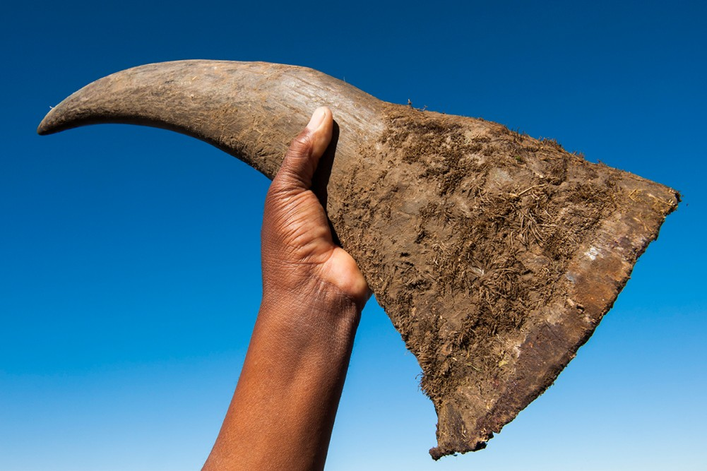 Rhino Horns Pembient