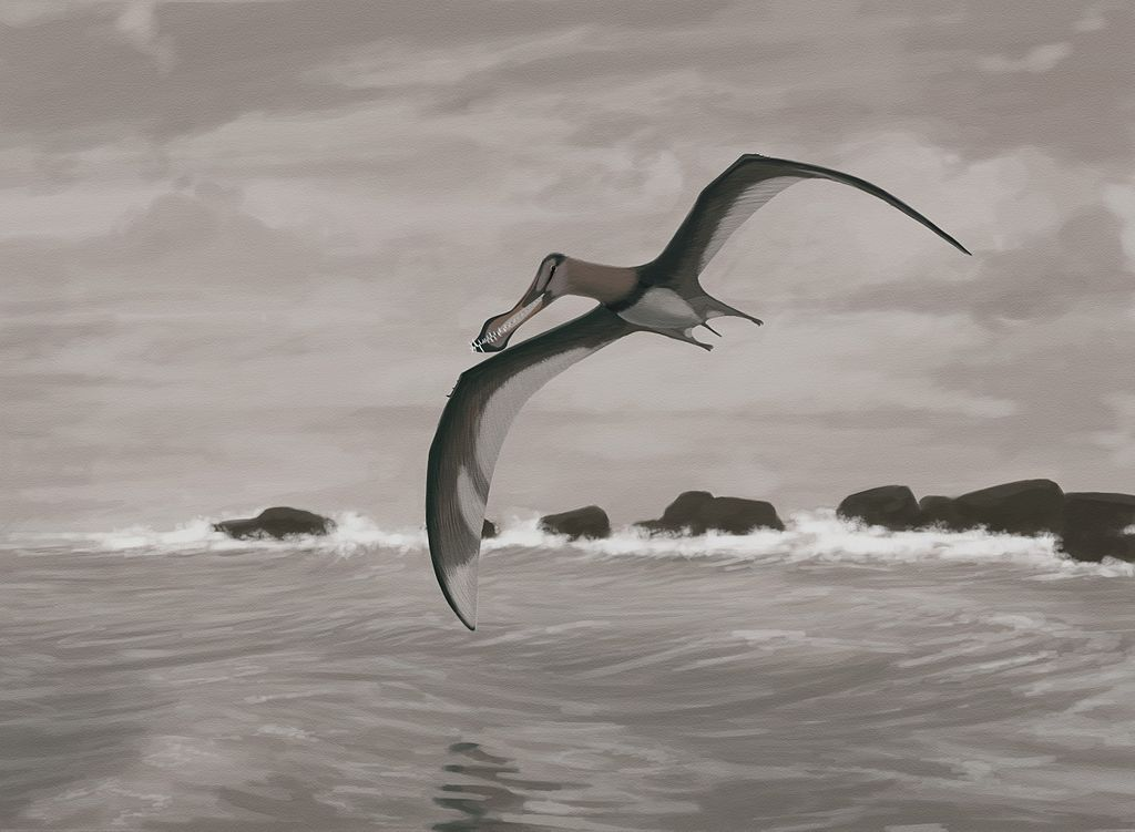 Pterosaur Flight