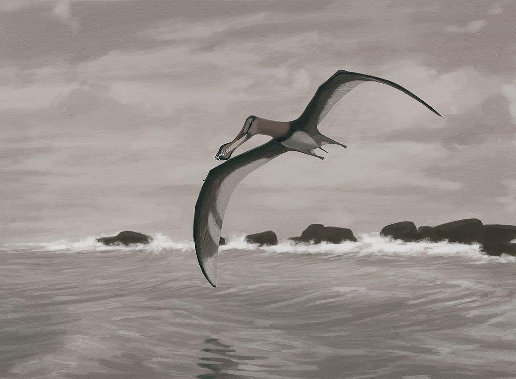 Pterosaur Flight