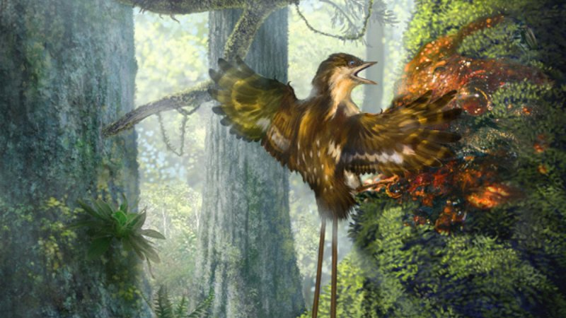 An illustration of a Enantiornithine partially ensnared by tree resin, based on one of the specimens discovered. (Chung-tat Cheung)
