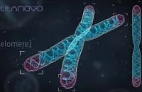 Telomeres & Telomerase
