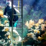 This Man Built an Aquarium in His Living Room Large Enough for Scuba Diving