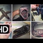This Russian Fisherman Has Been Posting Terrifying 'Alien Creatures' of the Deep on Twitter