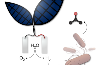 Biocomputers Bionic Leaf