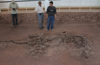 Oldest Proteins Ever Discovered are From a 195-Million-Year-Old Dinosaur Rib
