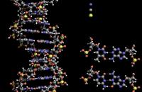 DNA Structure Biophotonics
