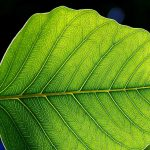 Unlocking the Secrets of Photosynthesis to Power Our World