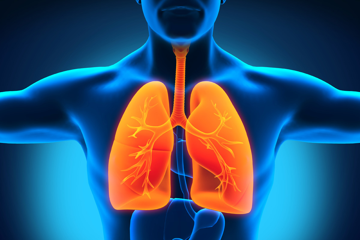 A New Lung Function Has Been Found Lungs Make Blood Industry Tap
