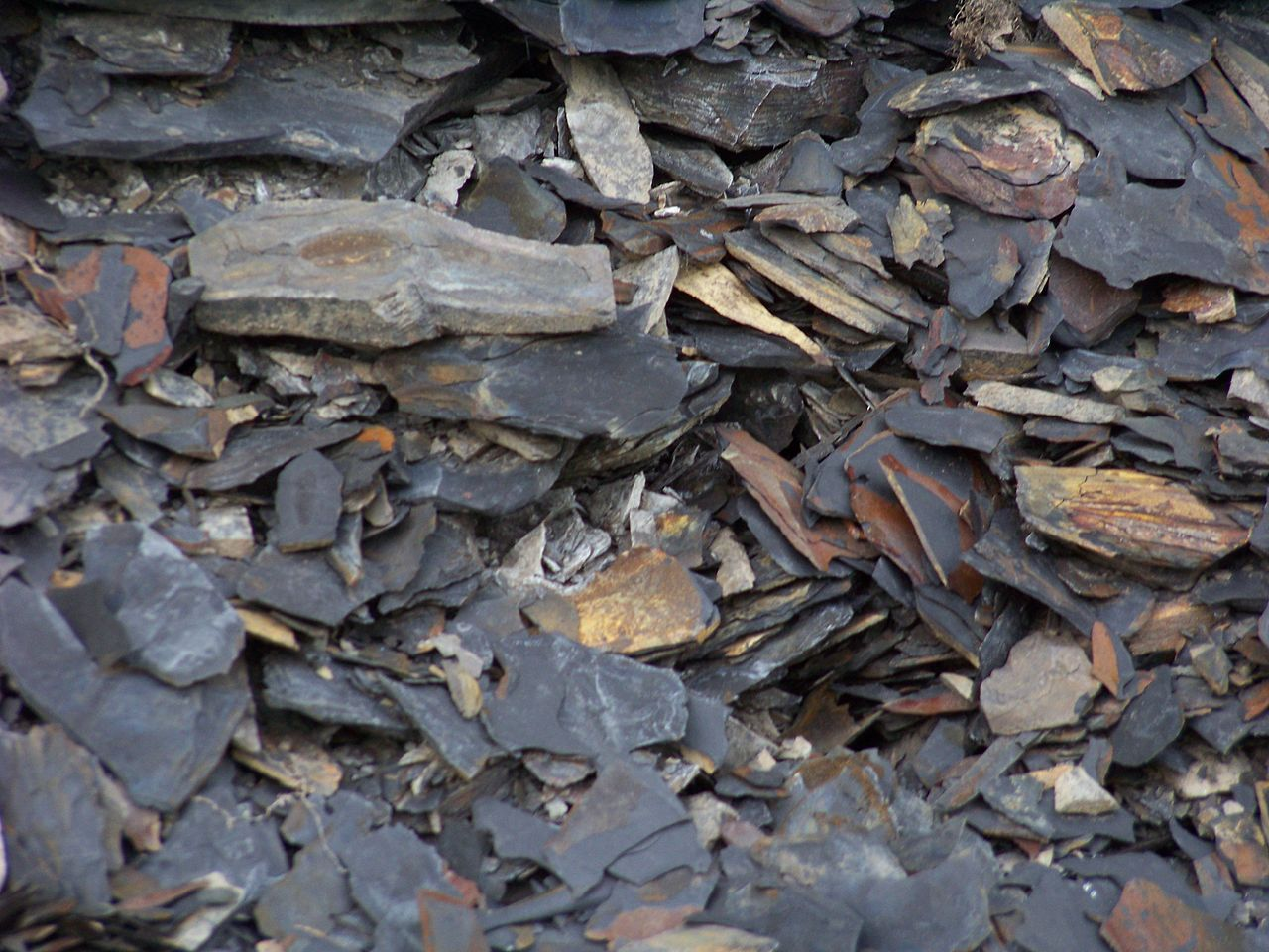 Marcellus Shale Oil CloseUp