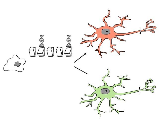 Stem Cell Research: Cornerstone of Regenerative Medicine
