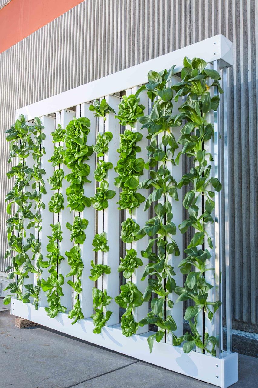 Vertical Farming Factories Delivering Eco Produce