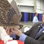 Robotic 3D-Printed Falcon to Scare Away Birds from Airports