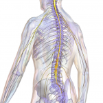 New Surgical Technique Gives Hope To Patients With Spinal Cord Injuries