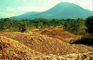1,000 Truckloads of Orange Peels Now Lush, Green Jungle