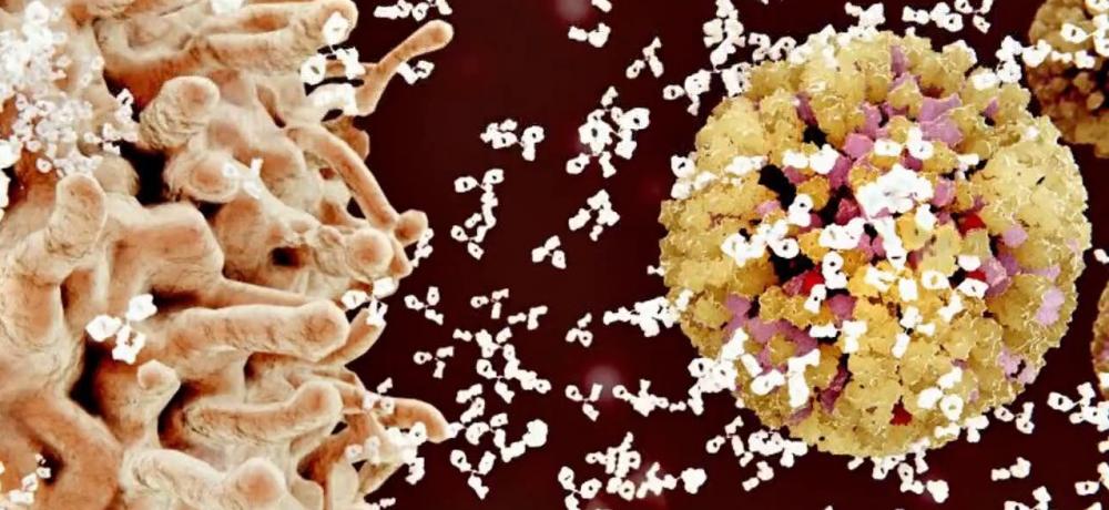 New antibody - Sanofi