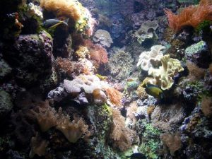 Corals Eat Plastic Because It Tastes Good to Them