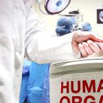 Abandoned Drug Could Prevent Organ Rejection