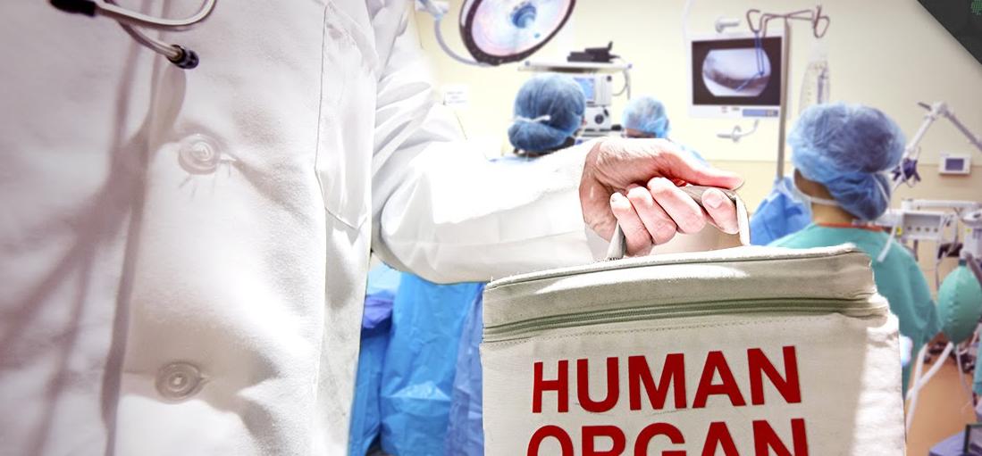 Drug may prevent organ rejection