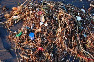 U.N. Resolution Promises to Reduce Ocean Plastic Waste