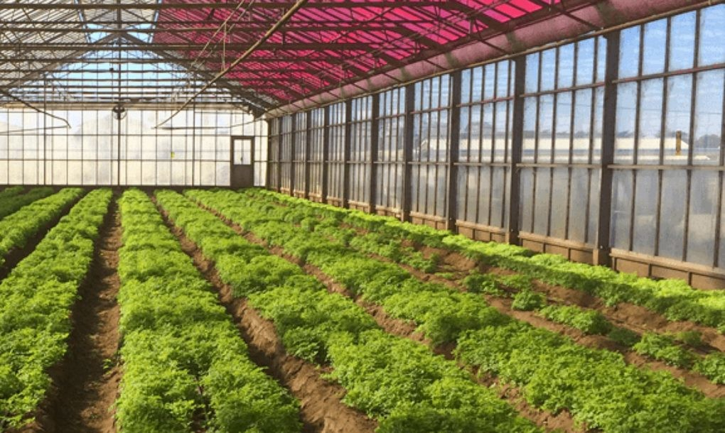 Solar Greenhouses Grow Crops, Generate Electricity