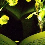 Glowing Plants Could One Day Replace Lamps
