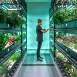 NYC Hydroponic Farm Promises Rare, Fresh Produce
